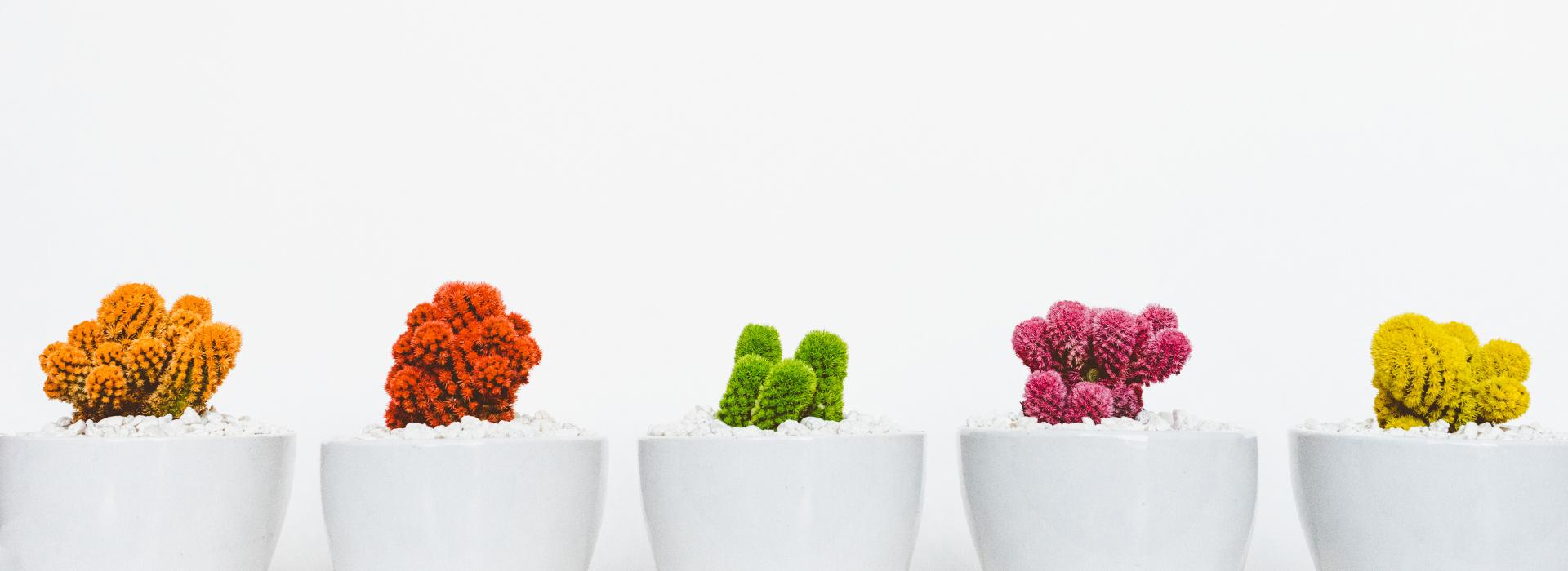 Kvety v interiéri 5krát inak